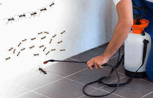 insect control firm